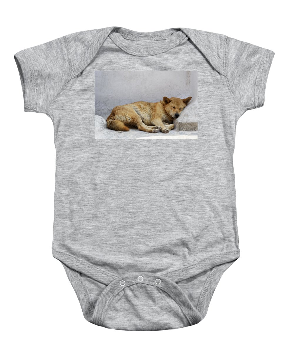 Dog Baby Onesie featuring the photograph Dog Sleeping by Dutourdumonde Photography
