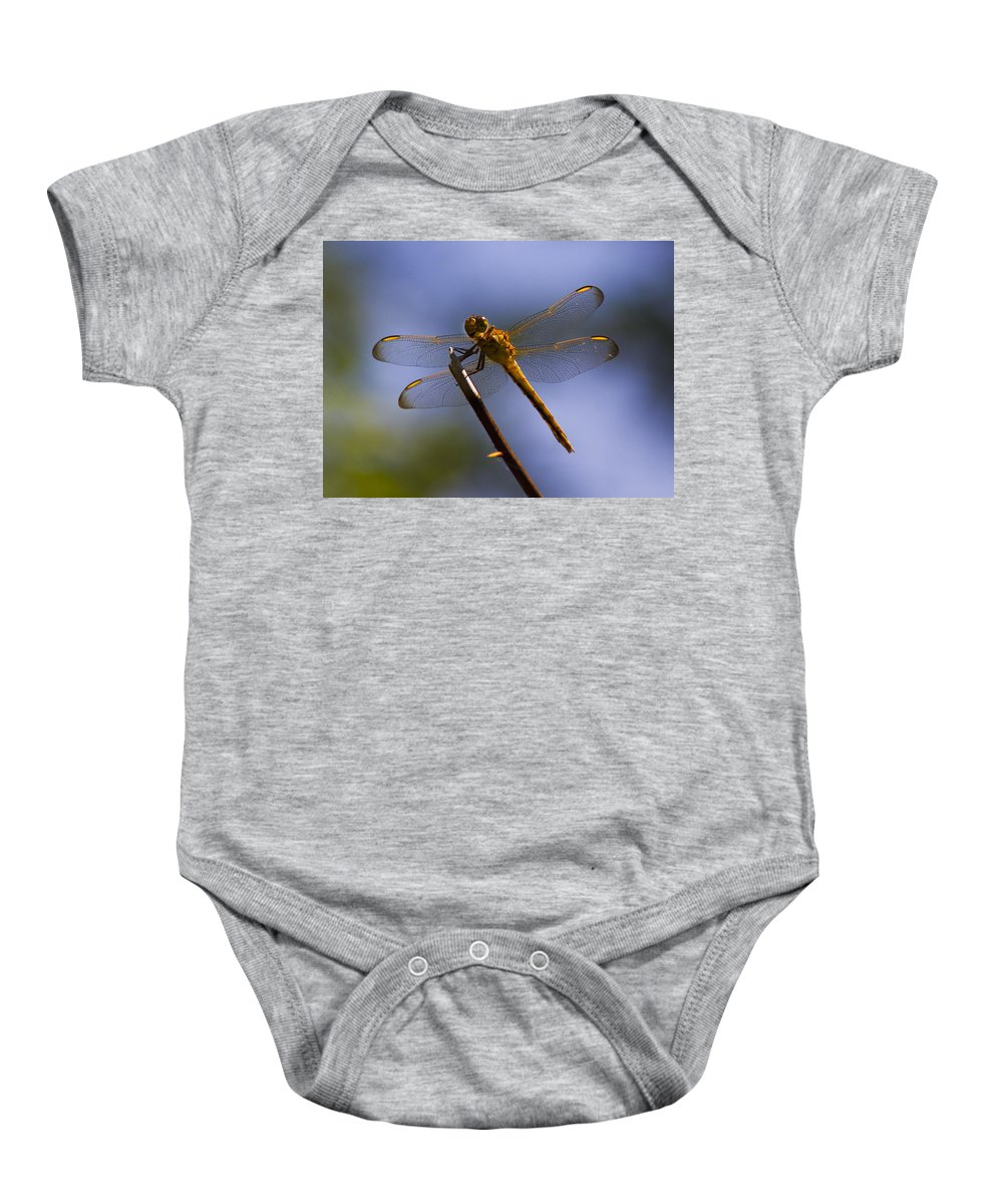 Nature Baby Onesie featuring the photograph Dragonfly by Sharon M Connolly
