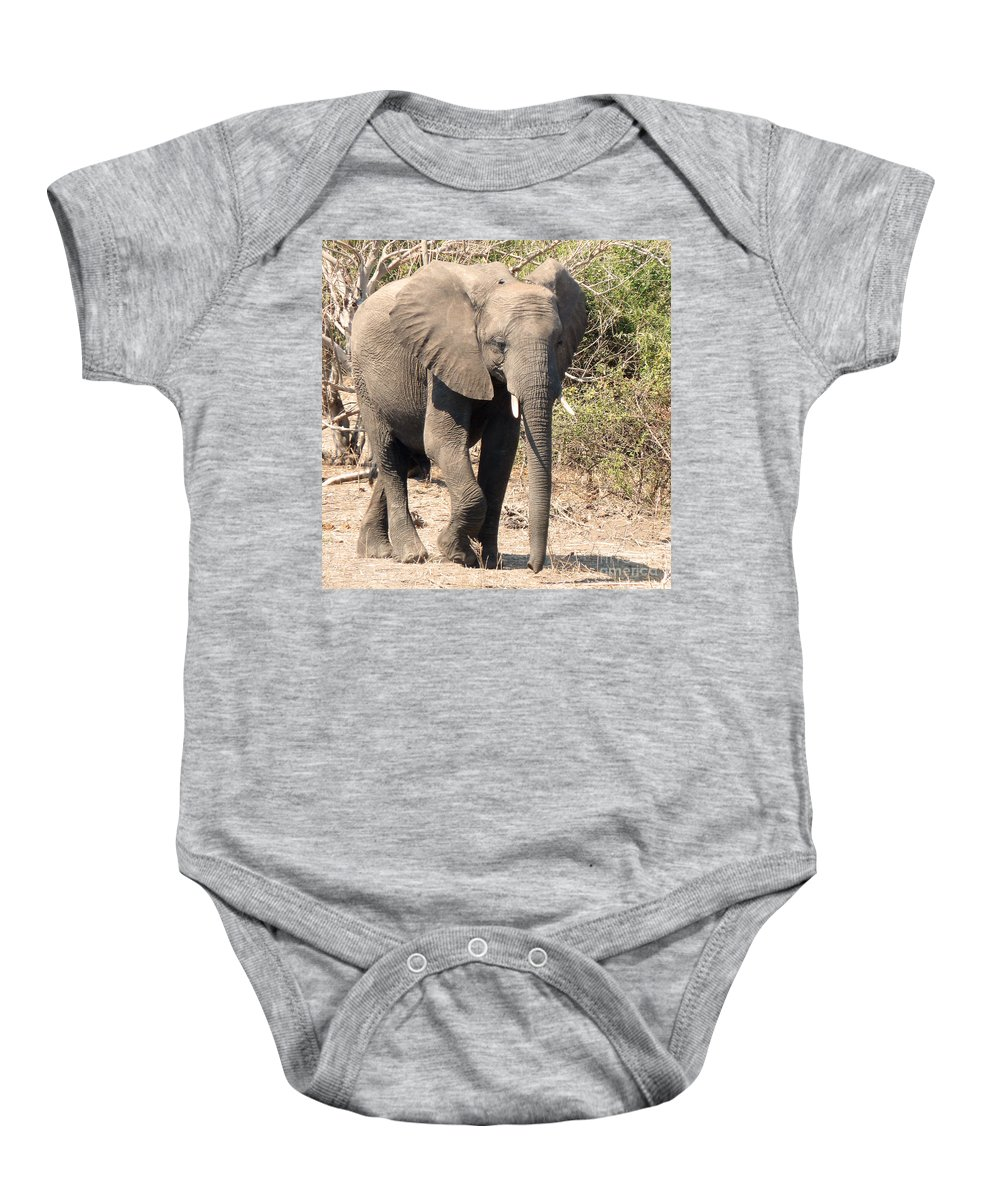 Elephant Baby Onesie featuring the photograph Elephant Stroll by Carolyn Jarvis