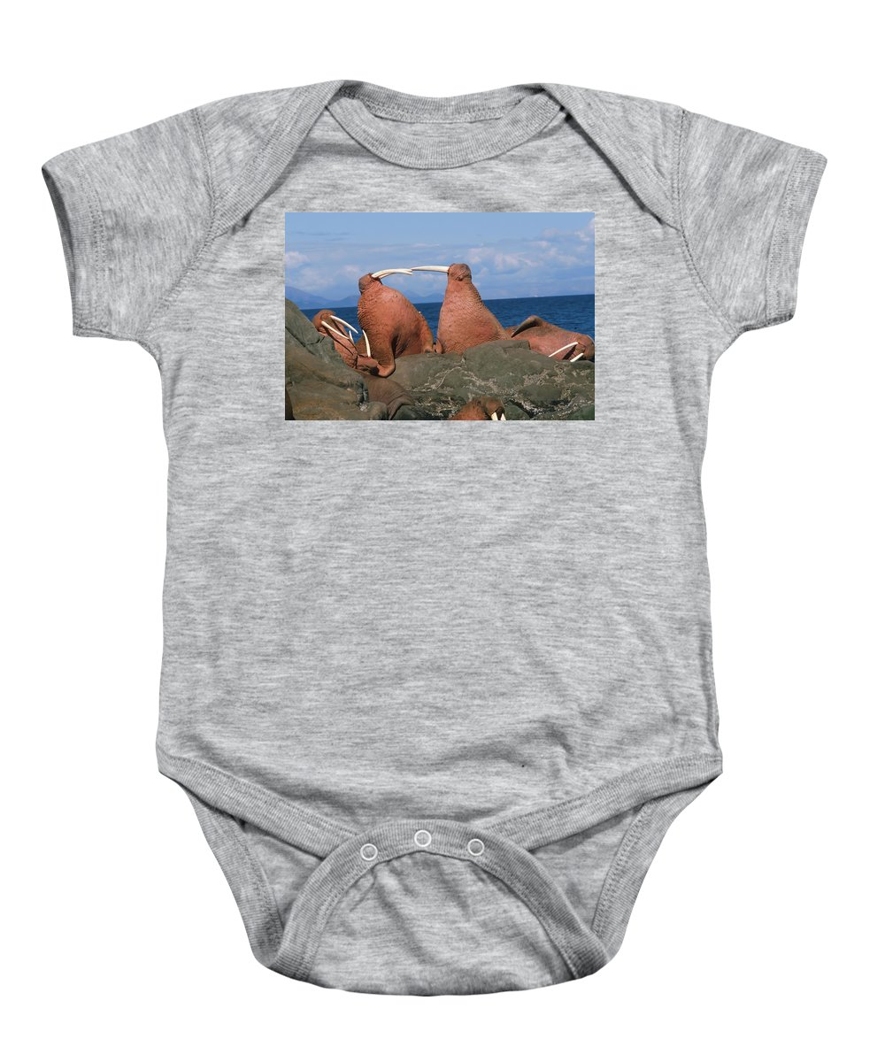 Bull Baby Onesie featuring the photograph Fighting Walrus by Alissa Crandall