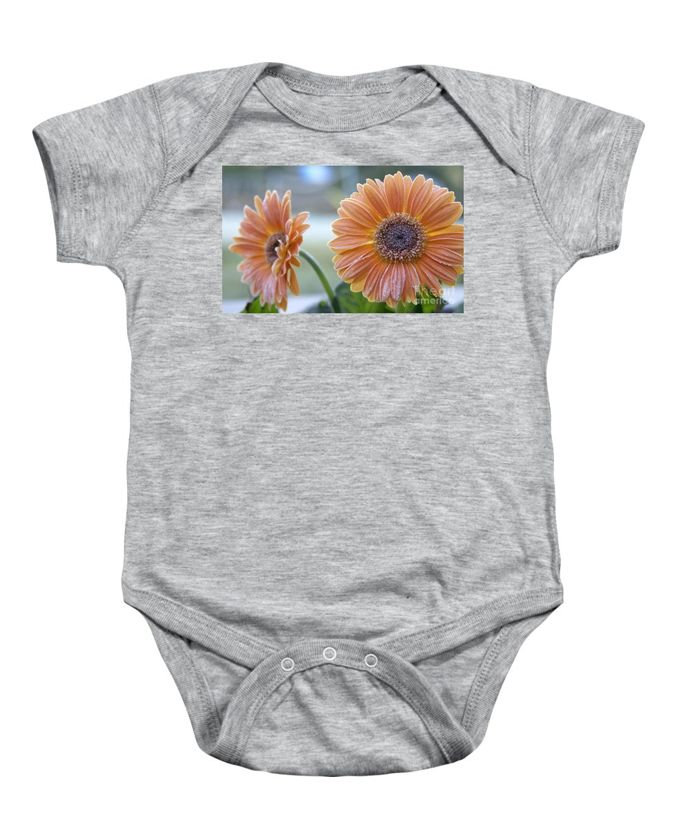 Frost Baby Onesie featuring the photograph Frosted Gerberas by SAJE Photography