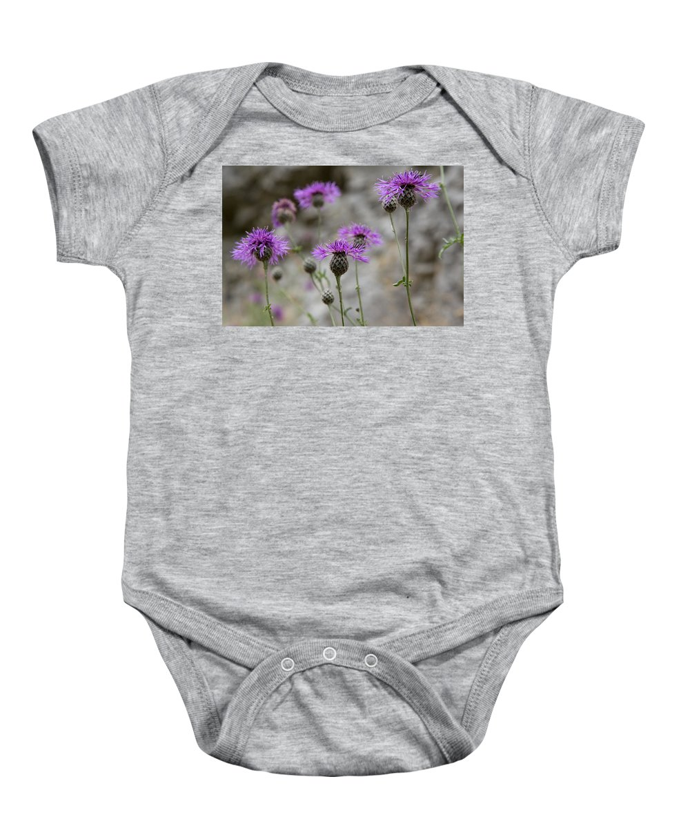 Plants Baby Onesie featuring the photograph Greater Knapweed by Bob Kemp