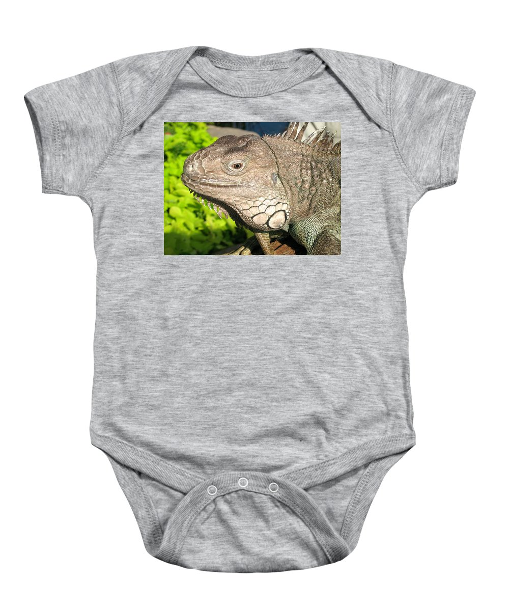 Green Iguana Baby Onesie featuring the photograph Green Iguana Face by Shoal Hollingsworth