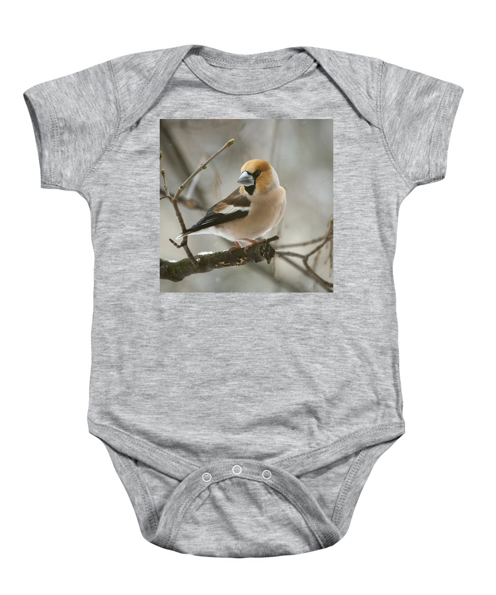 Hawfinch Baby Onesie featuring the photograph Hawfinch by Daniel Csoka