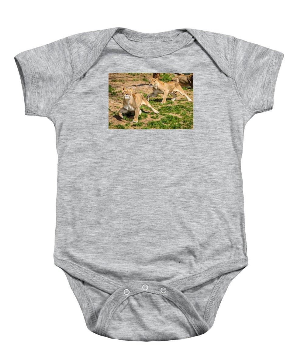 Lion Baby Onesie featuring the photograph Hokie Pokie by Pat Scanlon