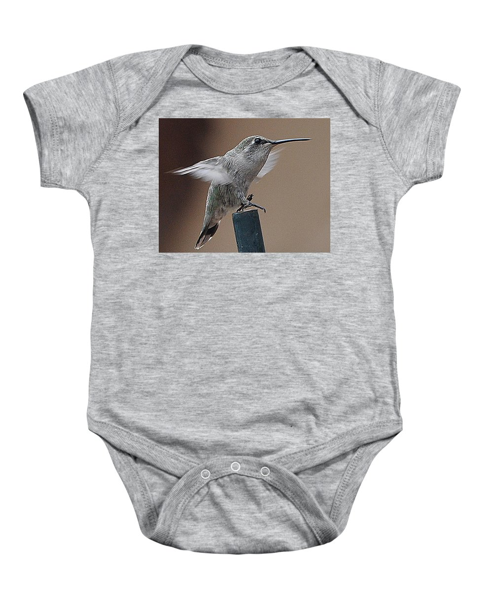 Animal Baby Onesie featuring the photograph Juvenile Anna At Rest by Jay Milo