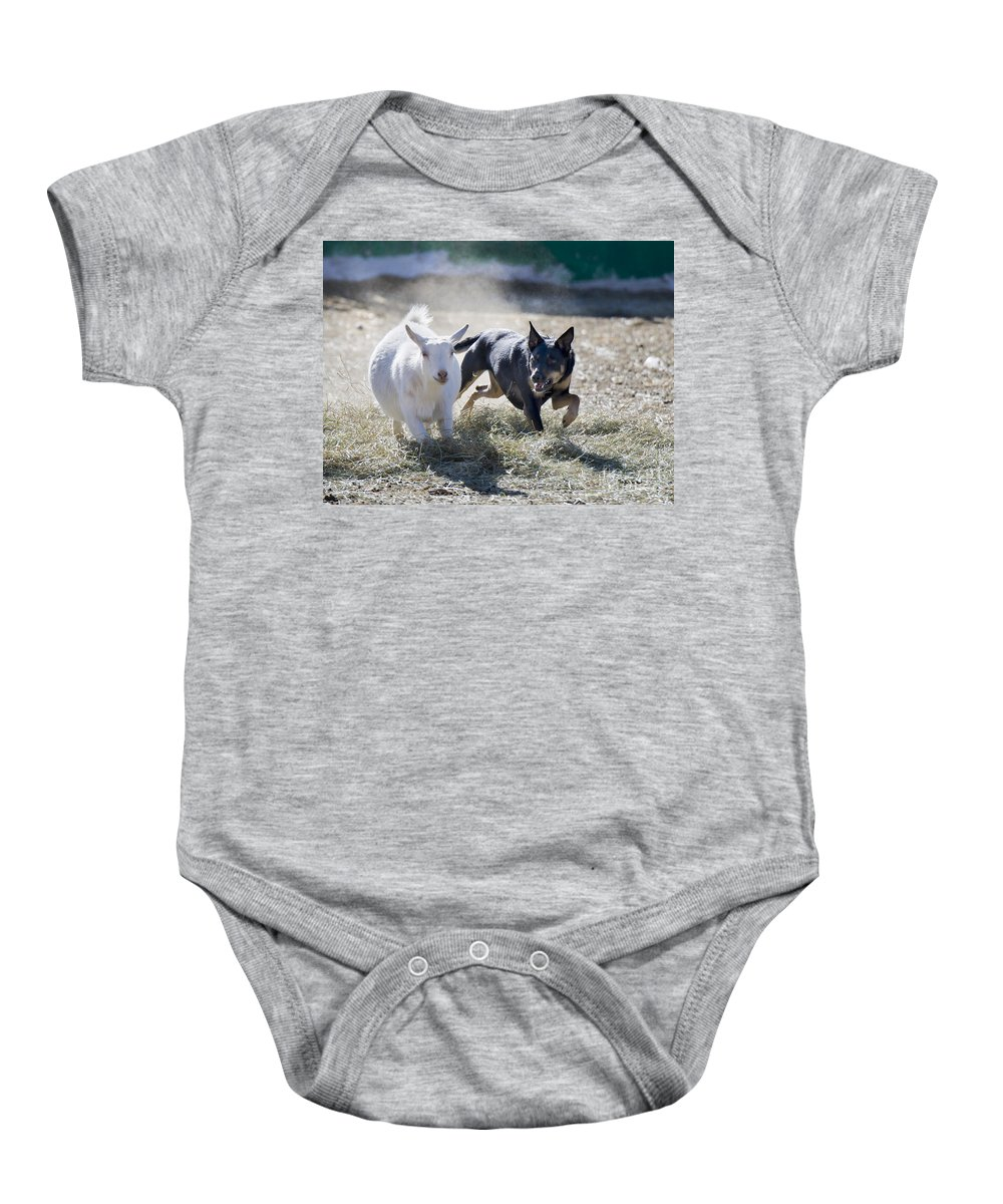Kelpie Baby Onesie featuring the photograph Kelpie Dog by Dianne Phelps
