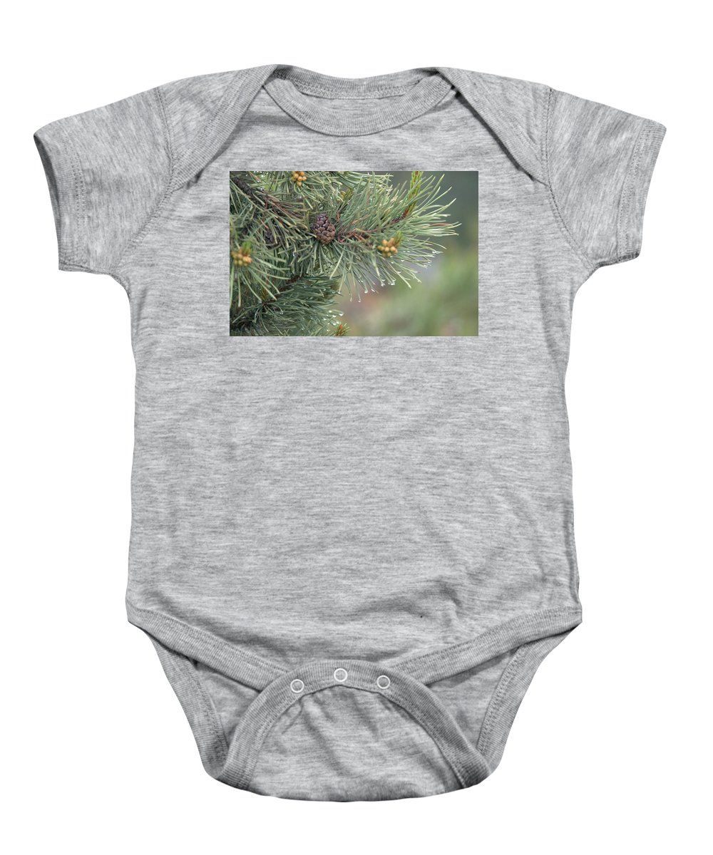 Pine Baby Onesie featuring the photograph Lodge Pole Pine In The Fog by Frank Madia