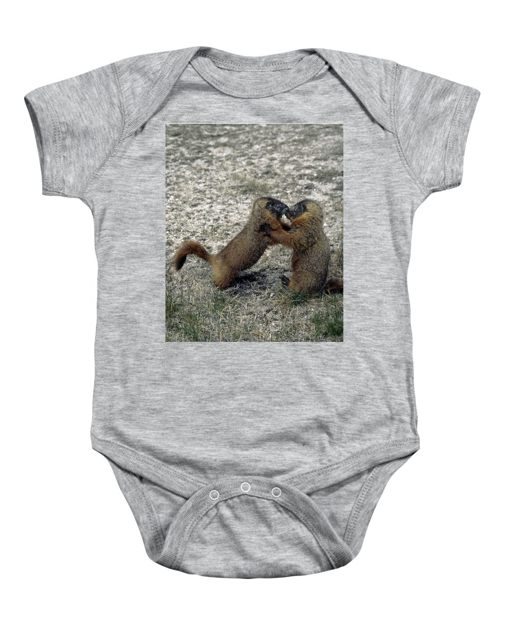 Yellow Bellied Marmot Baby Onesie featuring the photograph 4m09150-02-marmot Fight by Ed Cooper Photography