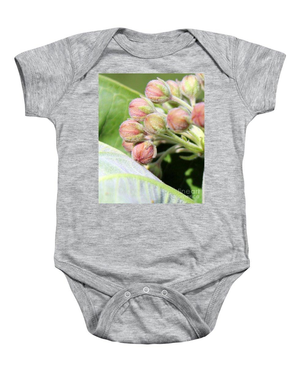 Milkweed Baby Onesie featuring the photograph Milkweed Before Bloom by Renee Croushore