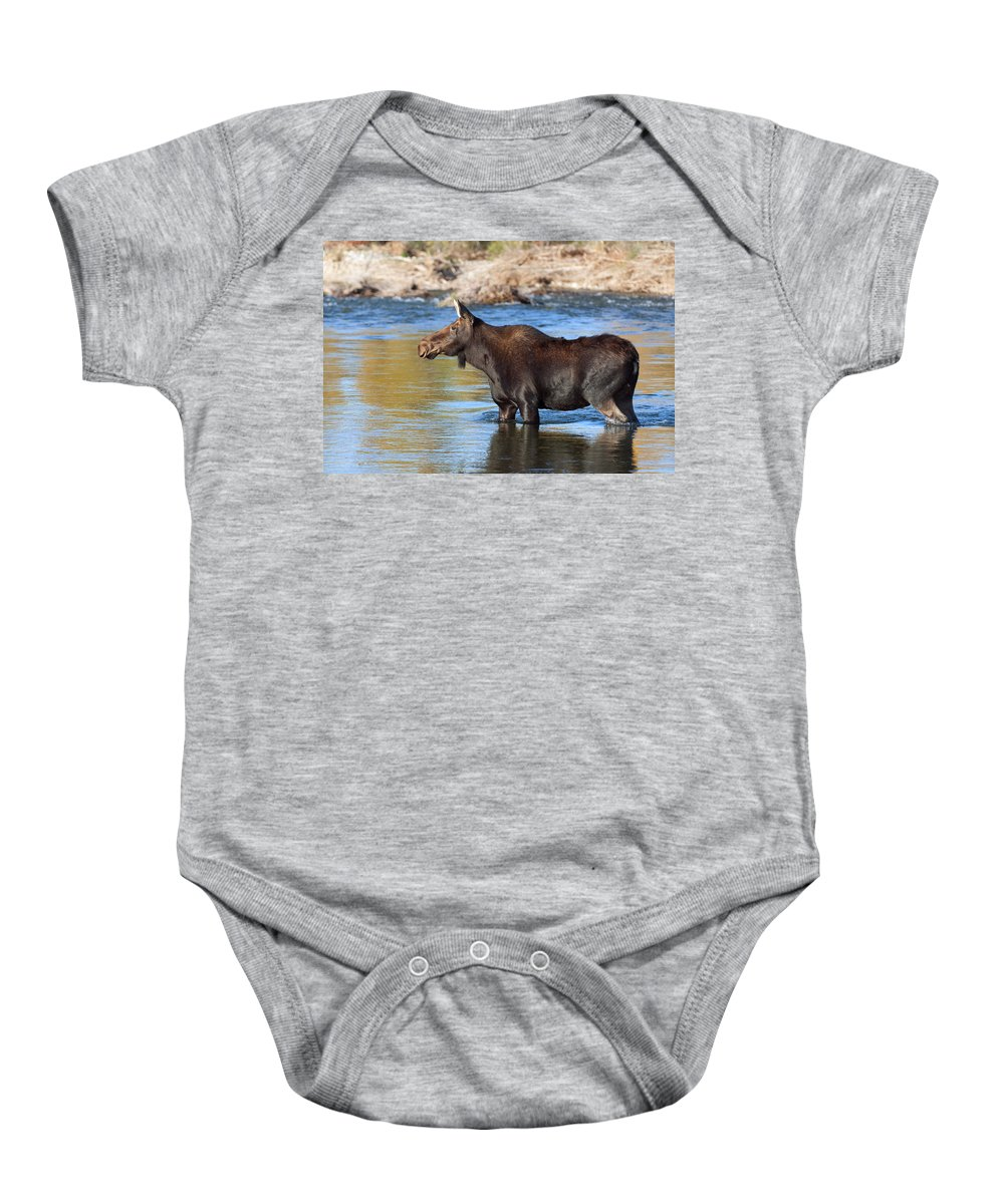 Moose Baby Onesie featuring the photograph Moose On The Gros Ventre River by Gary Langley