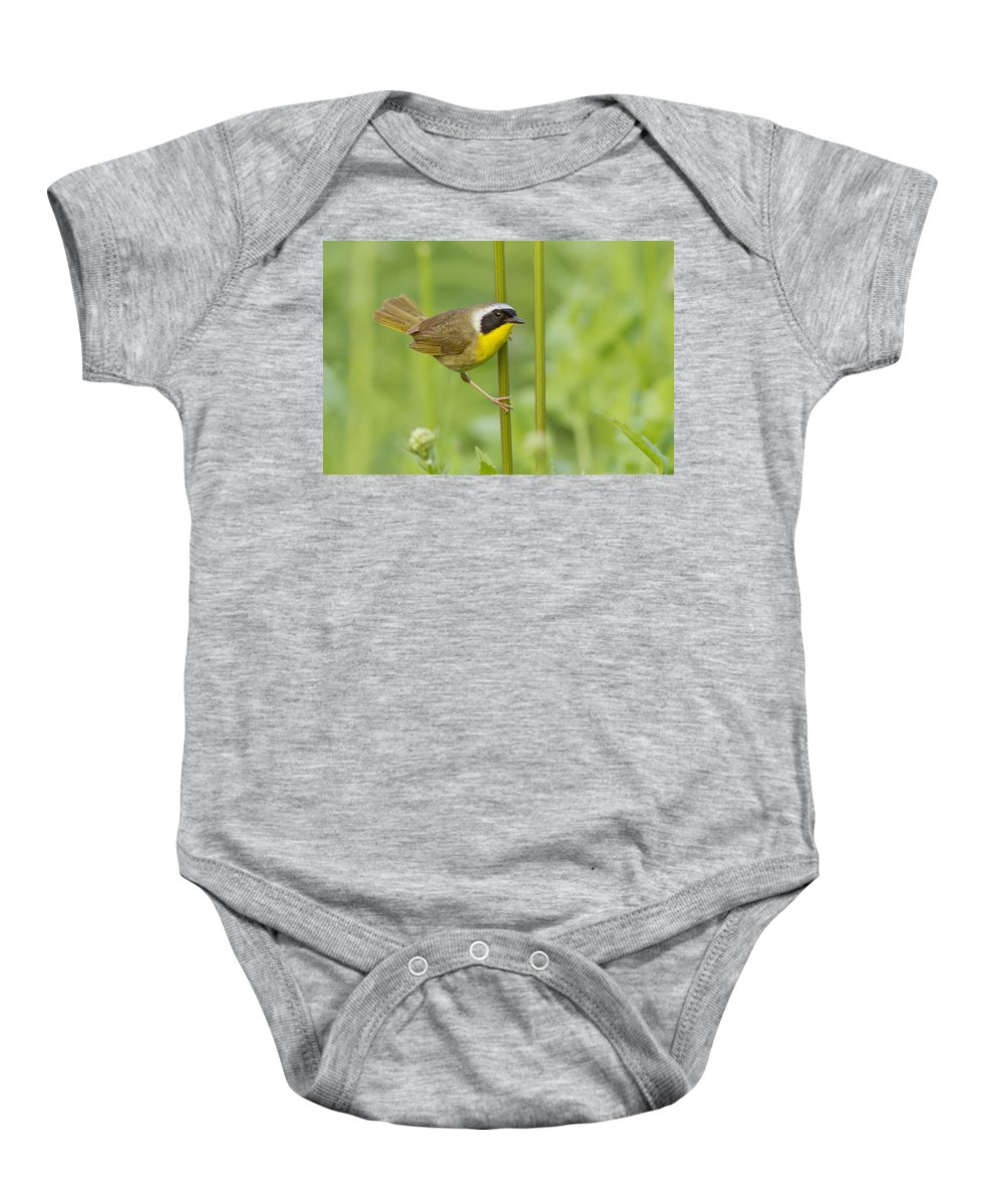 Warblers Baby Onesie featuring the photograph Mr Yellowthroat by Mircea Costina Photography