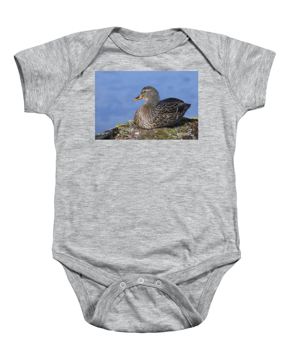 Mallard Baby Onesie featuring the photograph Mrs. Mallard by Sharon Talson