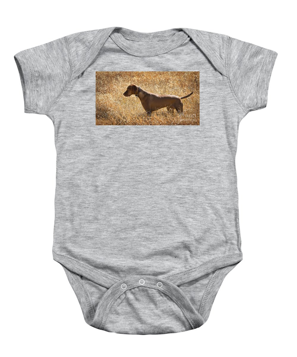 Dog Baby Onesie featuring the photograph On Point by Dianne Phelps