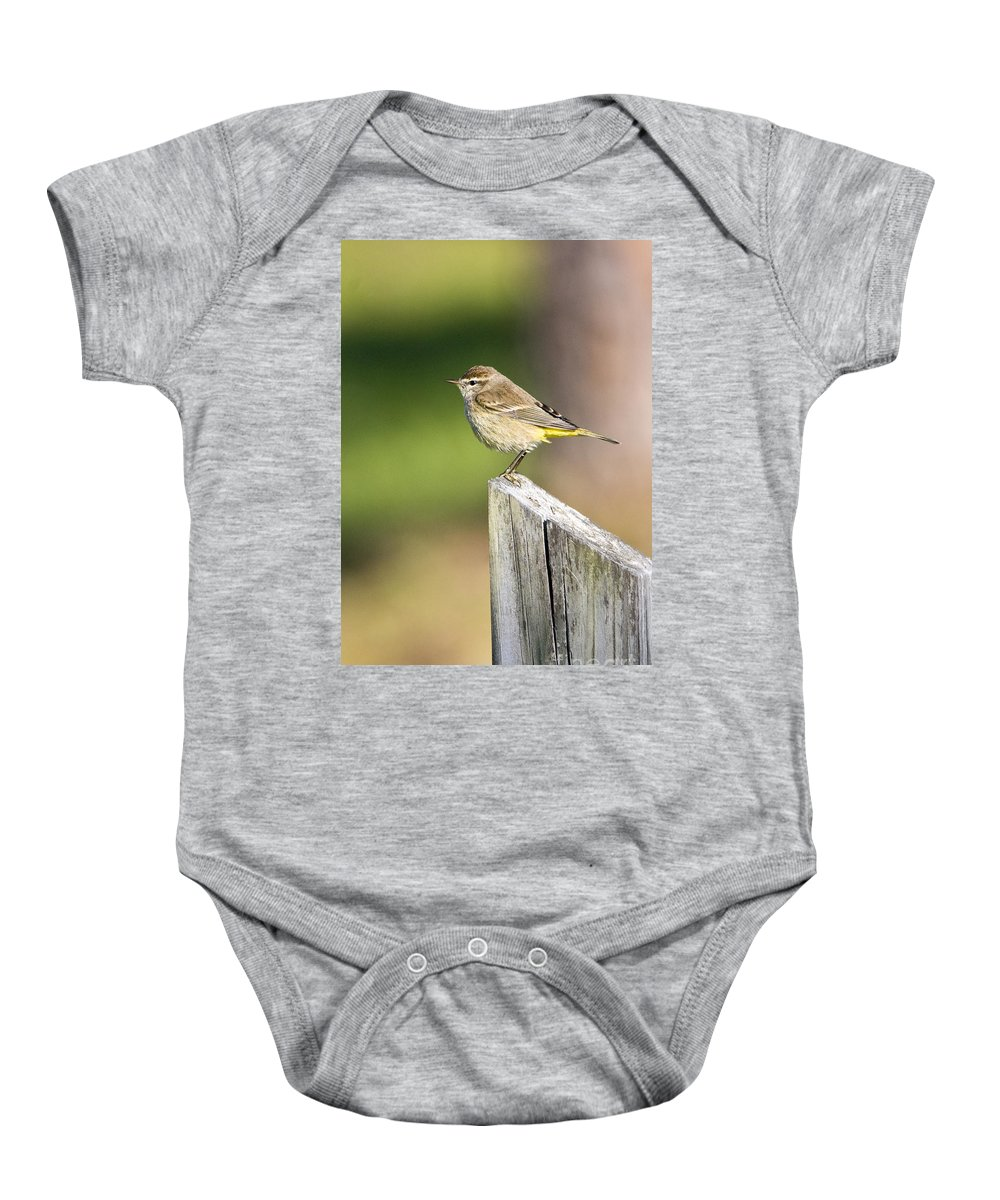Palm Warbler Baby Onesie featuring the photograph Palm Warbler by John Greco