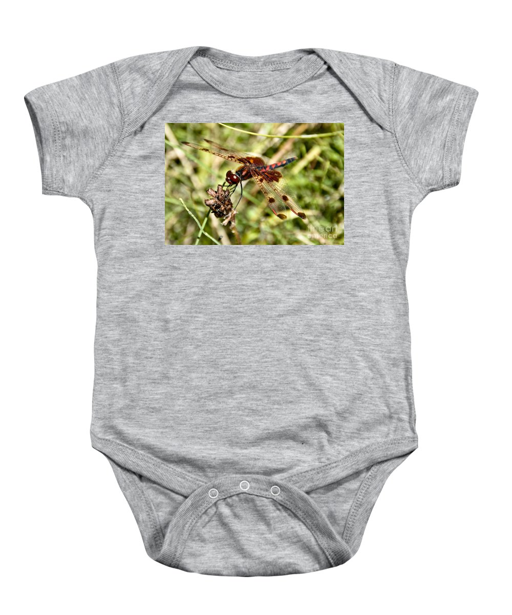 Dragonfly Baby Onesie featuring the photograph Perched Dragon by Cheryl Baxter