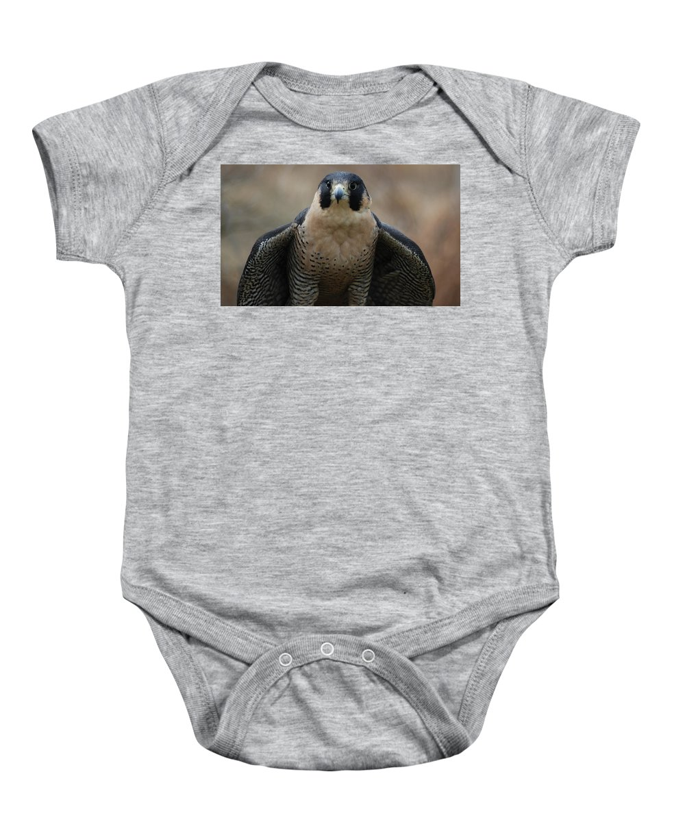 Falcon Baby Onesie featuring the photograph Peregrine Falcon by Richard Bryce and Family