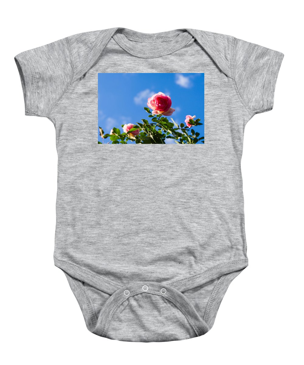 Background Baby Onesie featuring the photograph Pink Roses - Featured 3 by Alexander Senin