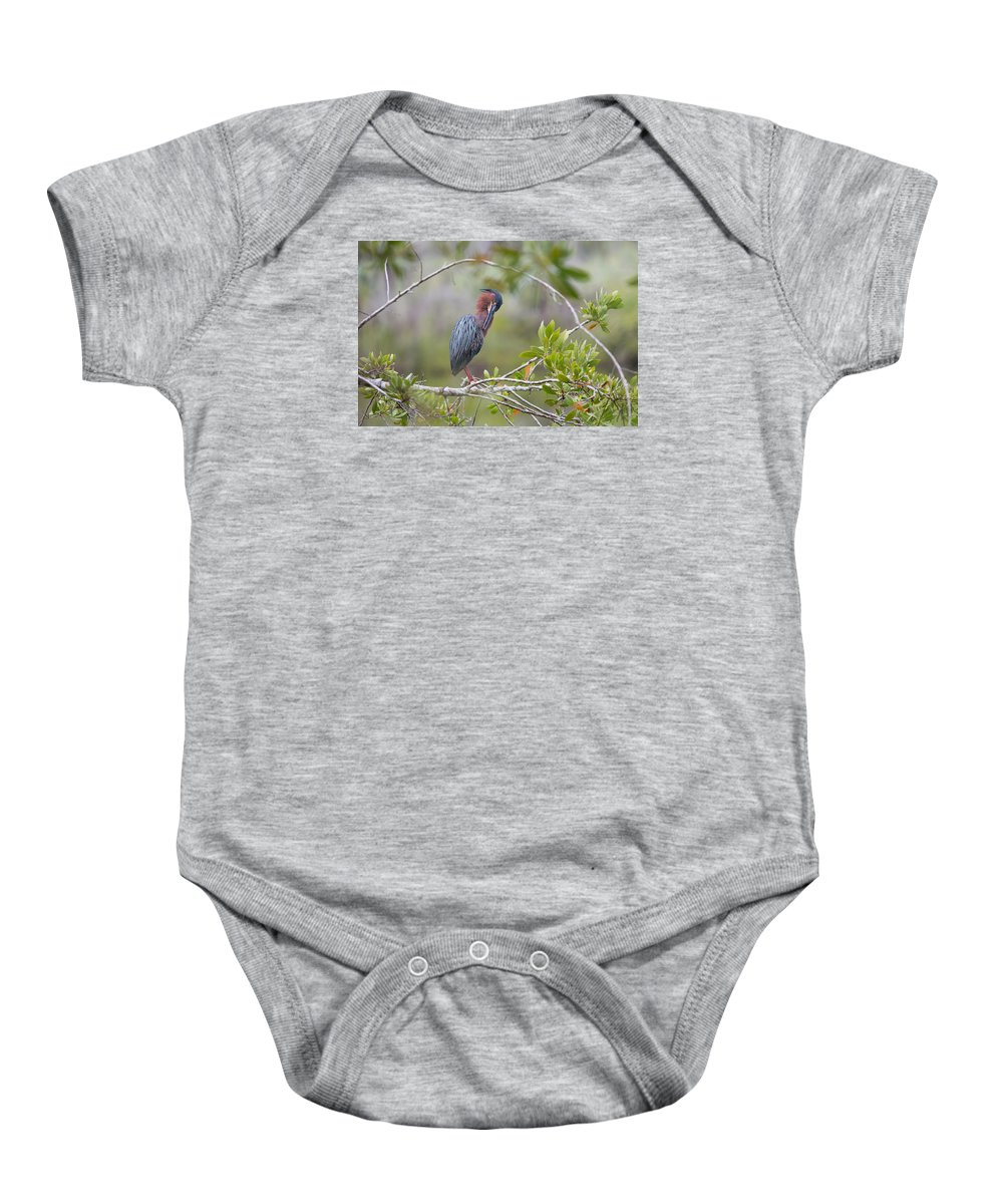 Green Heron Baby Onesie featuring the photograph Preening Greenie by John M Bailey