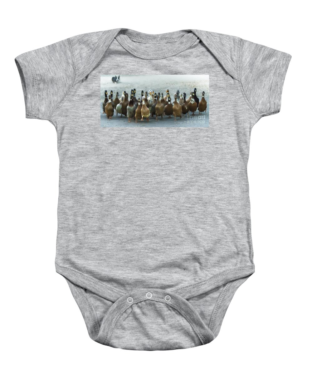 Ducks Baby Onesie featuring the photograph Professional Ducks 2 by Dianne Phelps