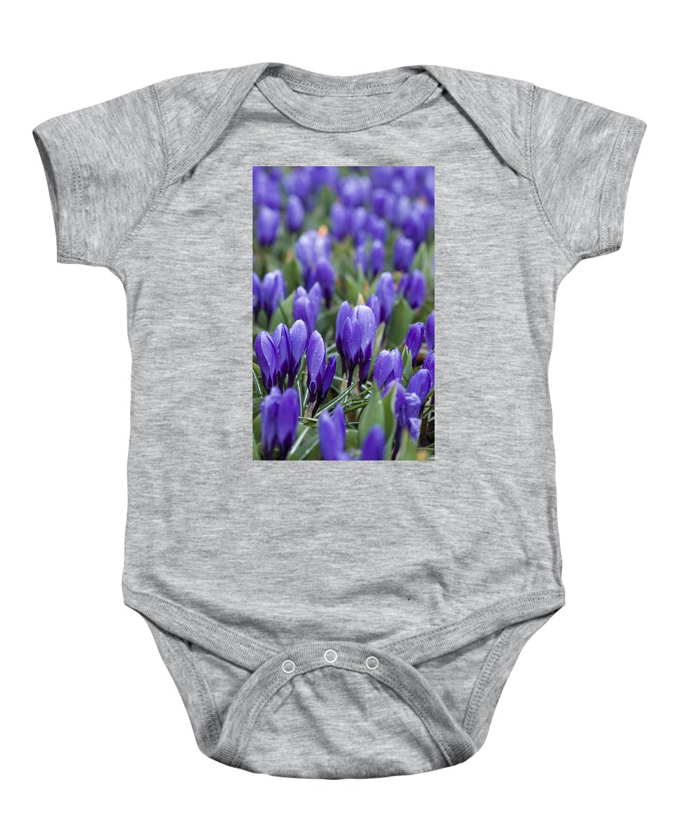 Botany Baby Onesie featuring the photograph Purple Crocuses by Juli Scalzi