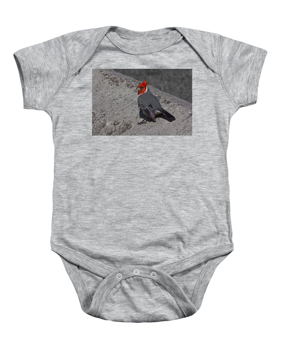 Red Crested Cardinals Baby Onesie featuring the photograph Red Head by Douglas Barnard