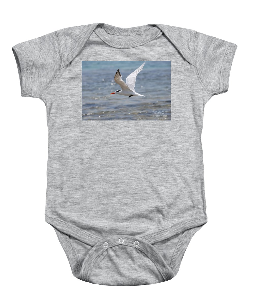 Royal Tern Baby Onesie featuring the photograph Royal Tern Flight by DejaVu Designs