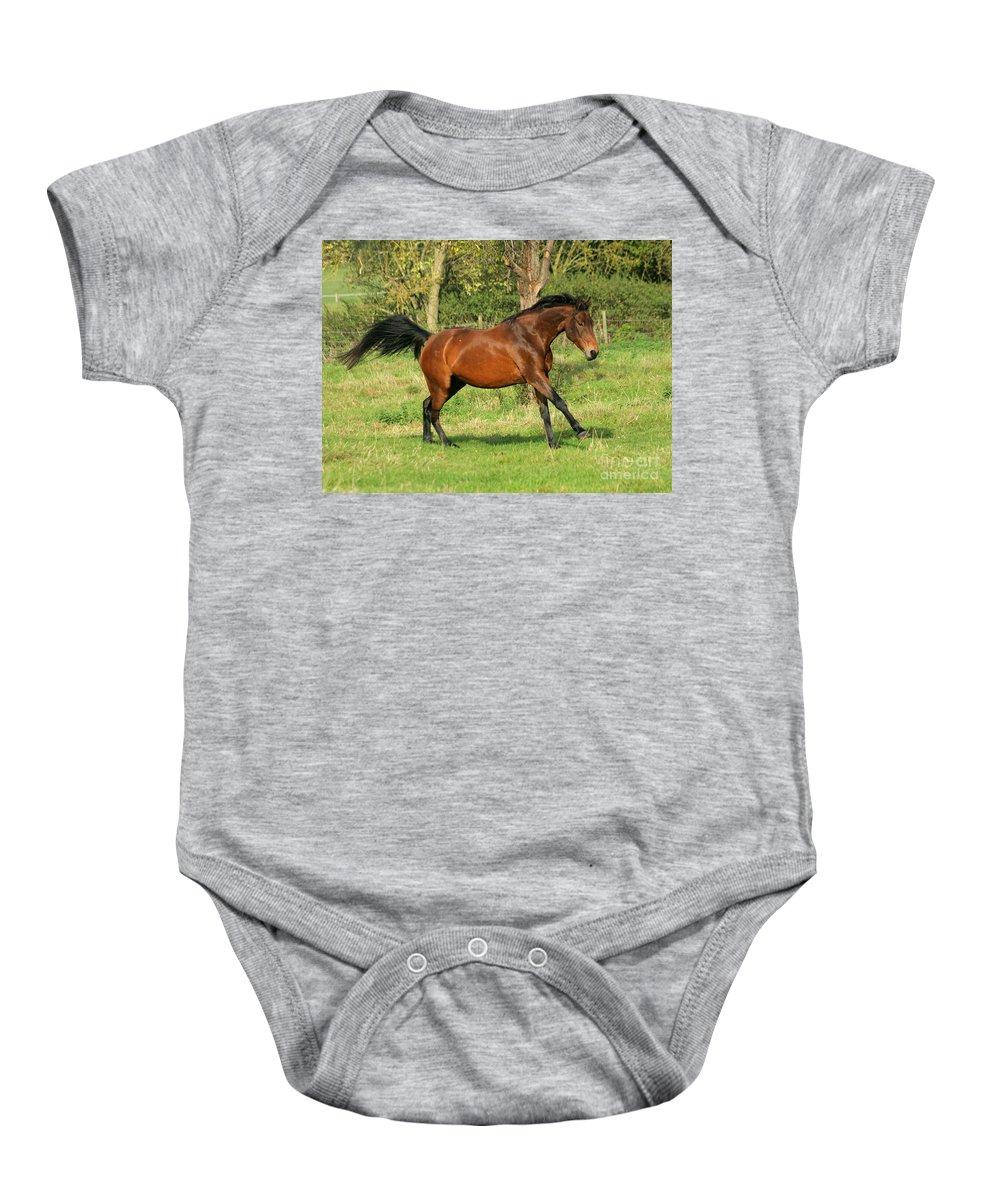 Horse Baby Onesie featuring the photograph Run Run by Angel Ciesniarska