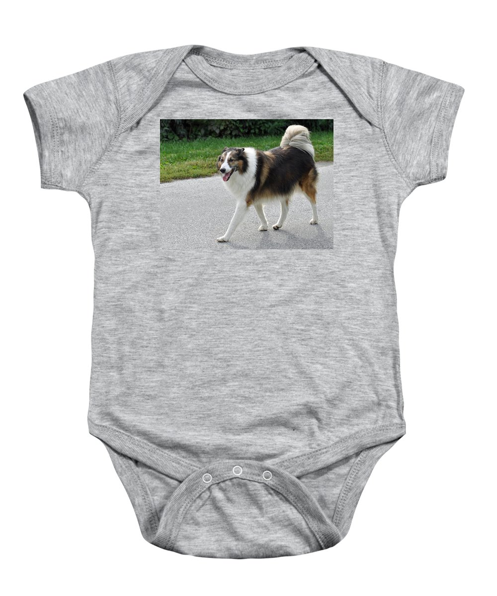 Animals Baby Onesie featuring the photograph Sheba by Lisa Phillips
