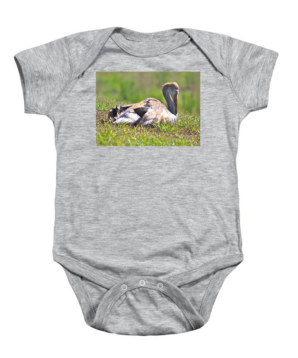 Sandhill Crane Baby Onesie featuring the photograph Sleepy Baby Sandhill Crane by Carol Groenen