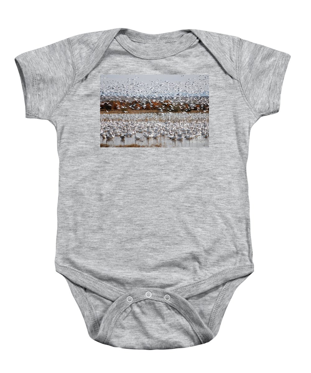 Snow Geese Baby Onesie featuring the photograph Snow Geese No.4 by John Greco