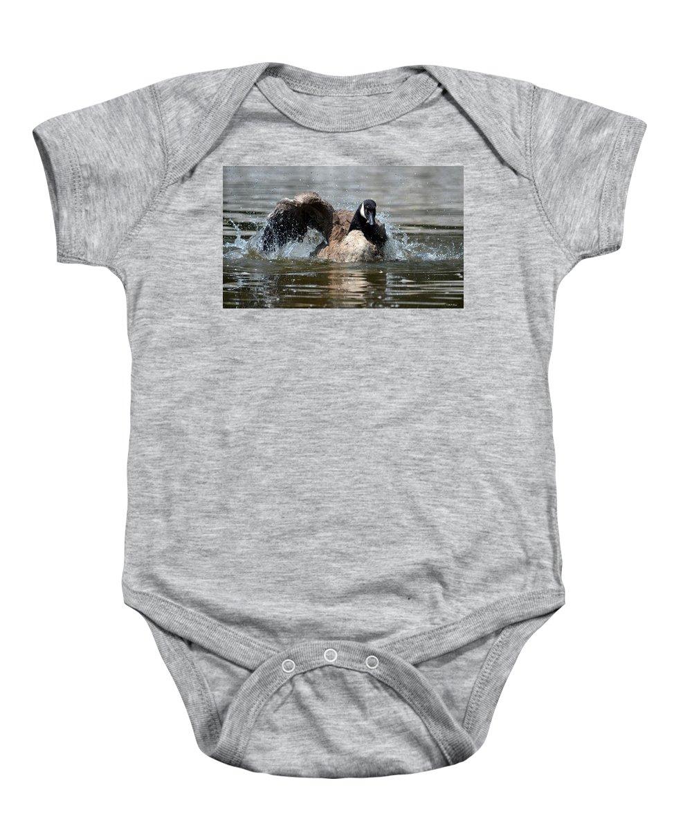 Summer Lovin - Canadian Goose Baby Onesie featuring the photograph Summer Lovin - Canadian Goose by Maria Urso
