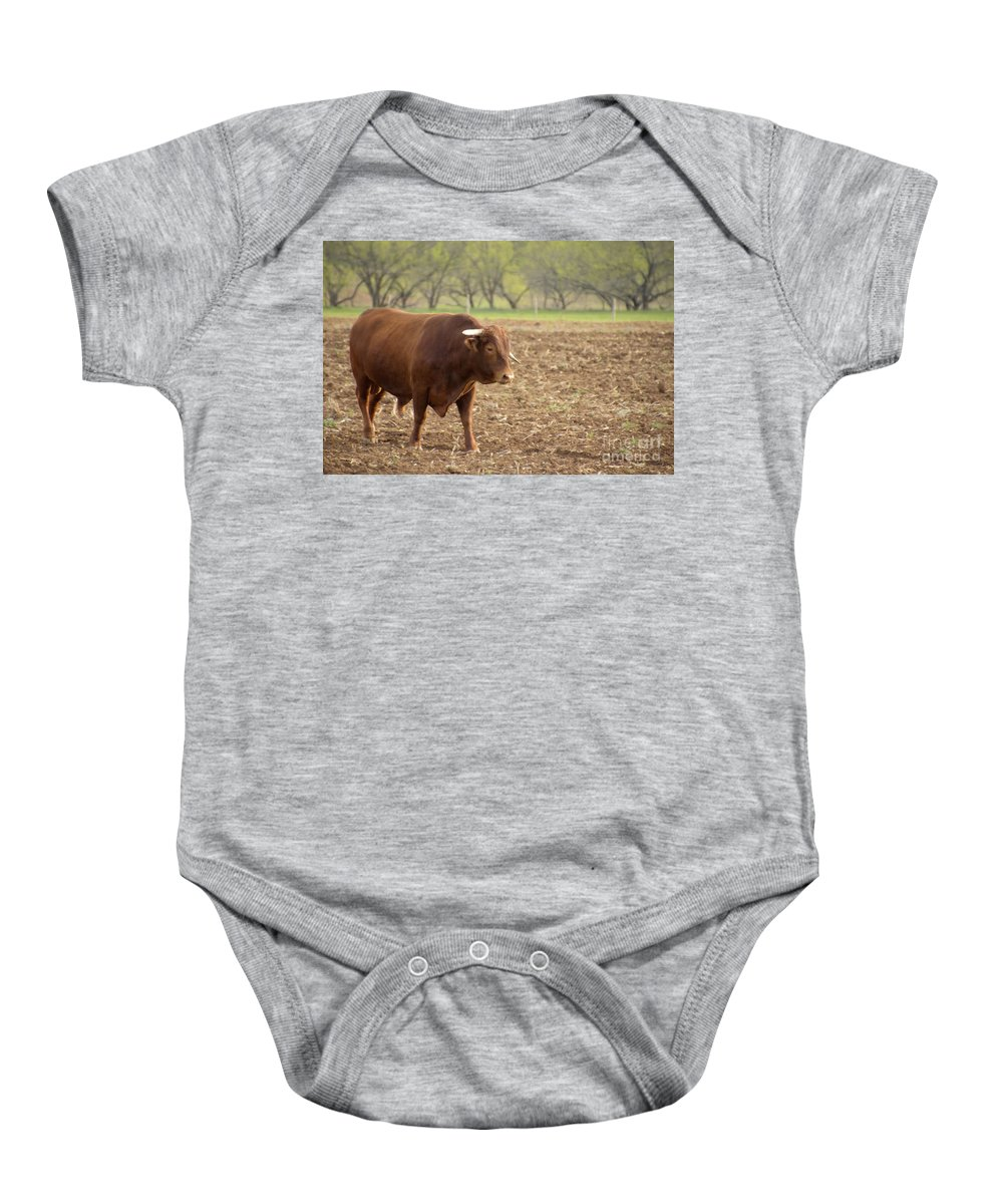 Long Horn Cattle Baby Onesie featuring the photograph The Boss by Douglas Barnard