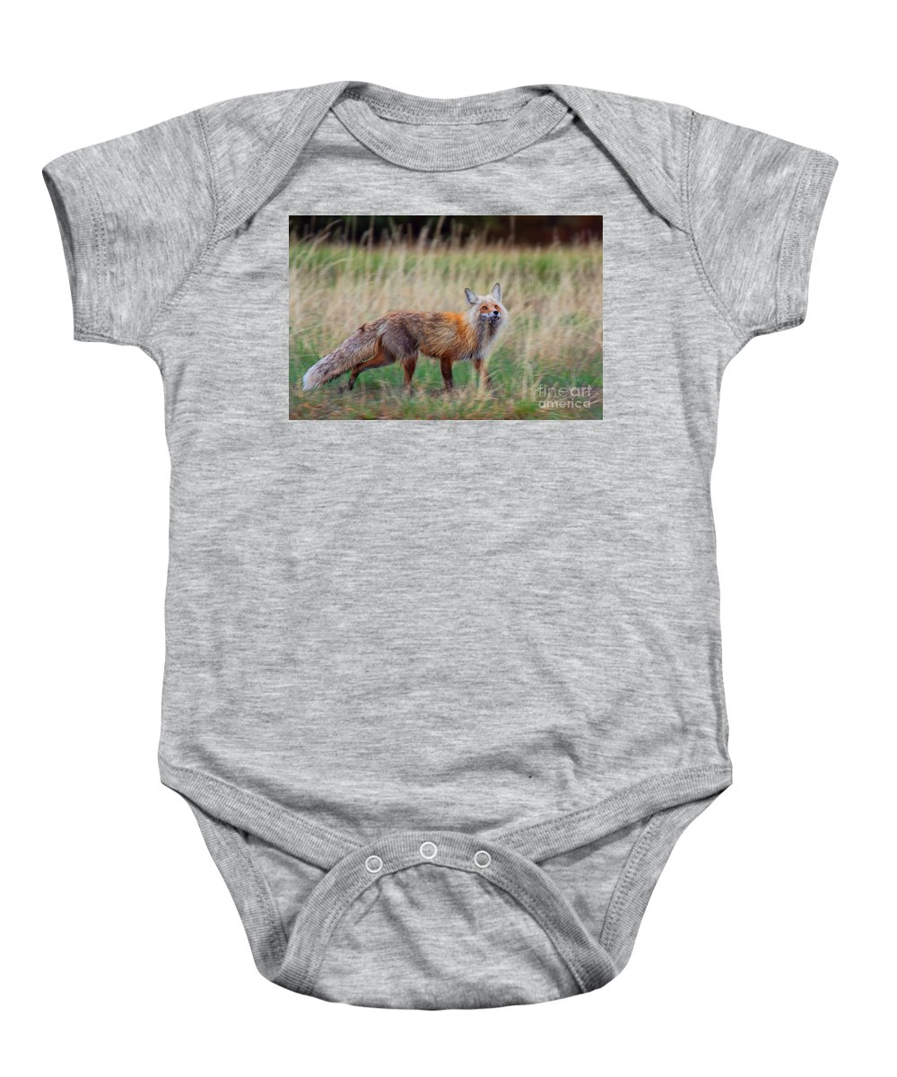 Red Fox Photograph Baby Onesie featuring the photograph The Grateful Vixen by Jim Garrison