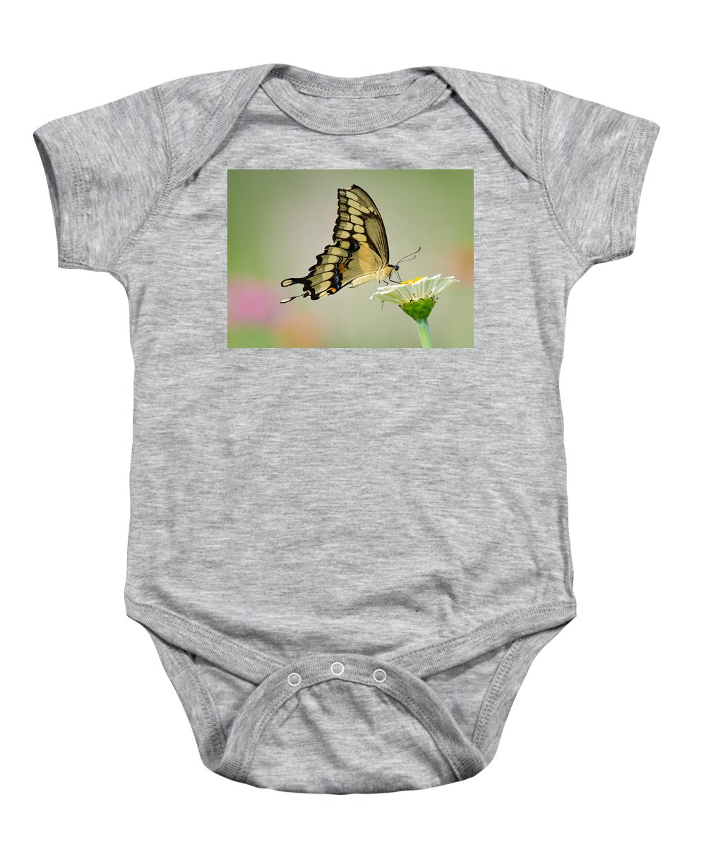 Swallowtail Baby Onesie featuring the photograph Torn Beauty by Linda Shannon Morgan