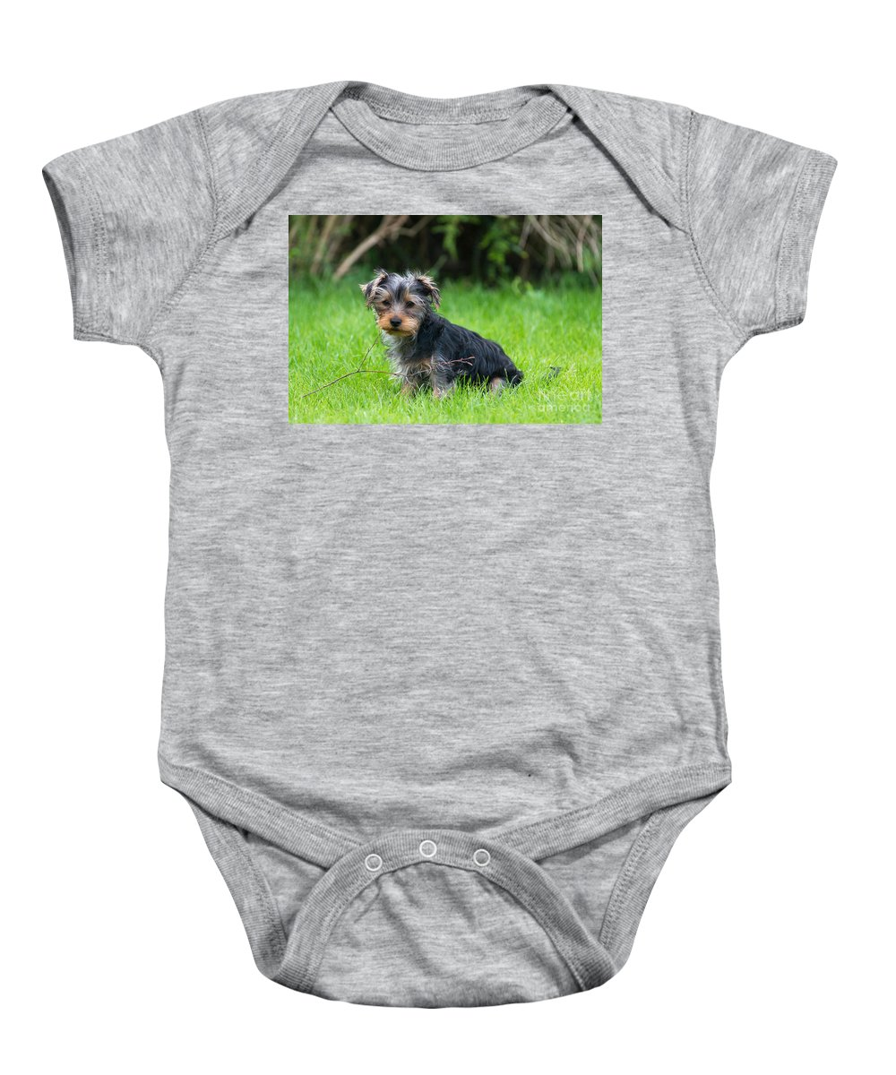 Yorkshire Terrier Baby Onesie featuring the photograph Twigs by Andrew Michael