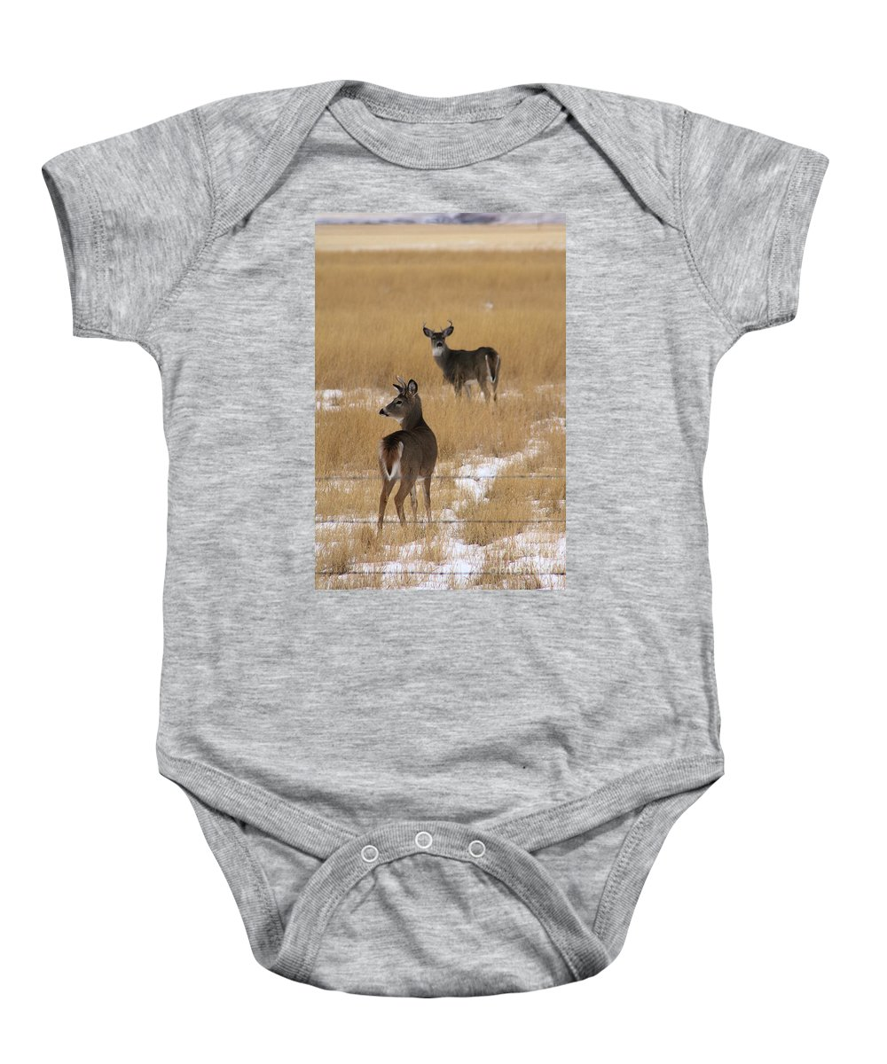 Deer Baby Onesie featuring the photograph Two Bucks by Alyce Taylor