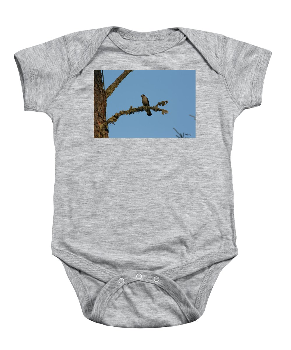 Gray Jay Whiskey Jack Bird Nature Wildlife Sky Tree Baby Onesie featuring the photograph Whiskey Jack by Andrea Lawrence