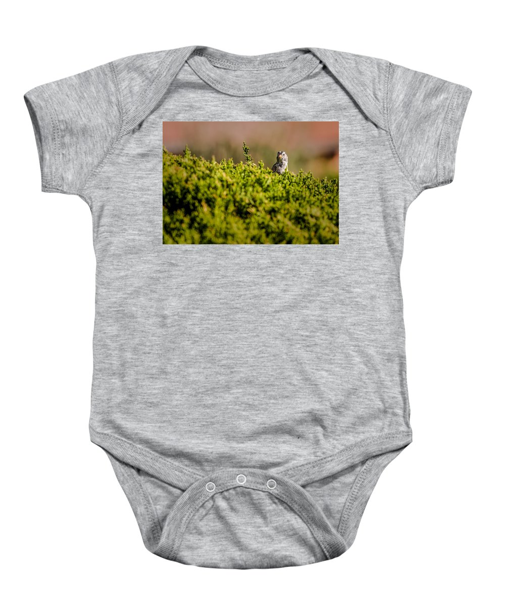White-crowned Sparrow Baby Onesie featuring the photograph White-crowned Sparrow In A Bush by Onyonet Photo Studios