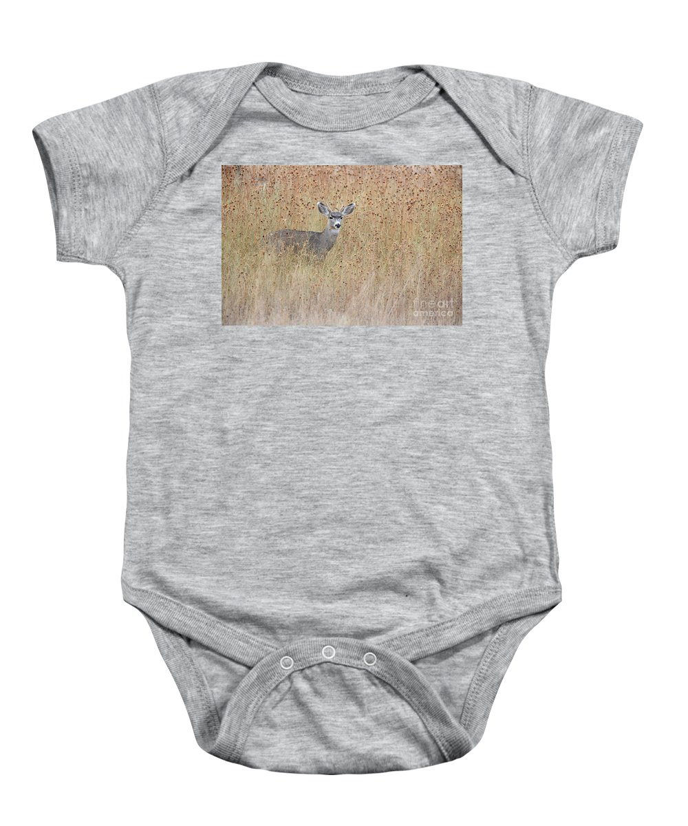 Mule Deer Baby Onesie featuring the photograph Young Buck by Bryan Keil