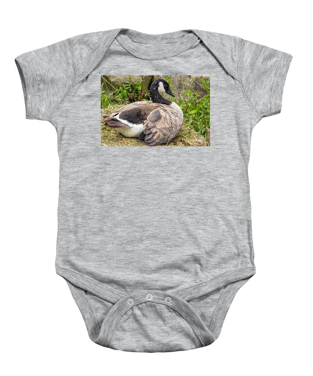 Bird Baby Onesie featuring the photograph Young Canada Goose by Kate Brown