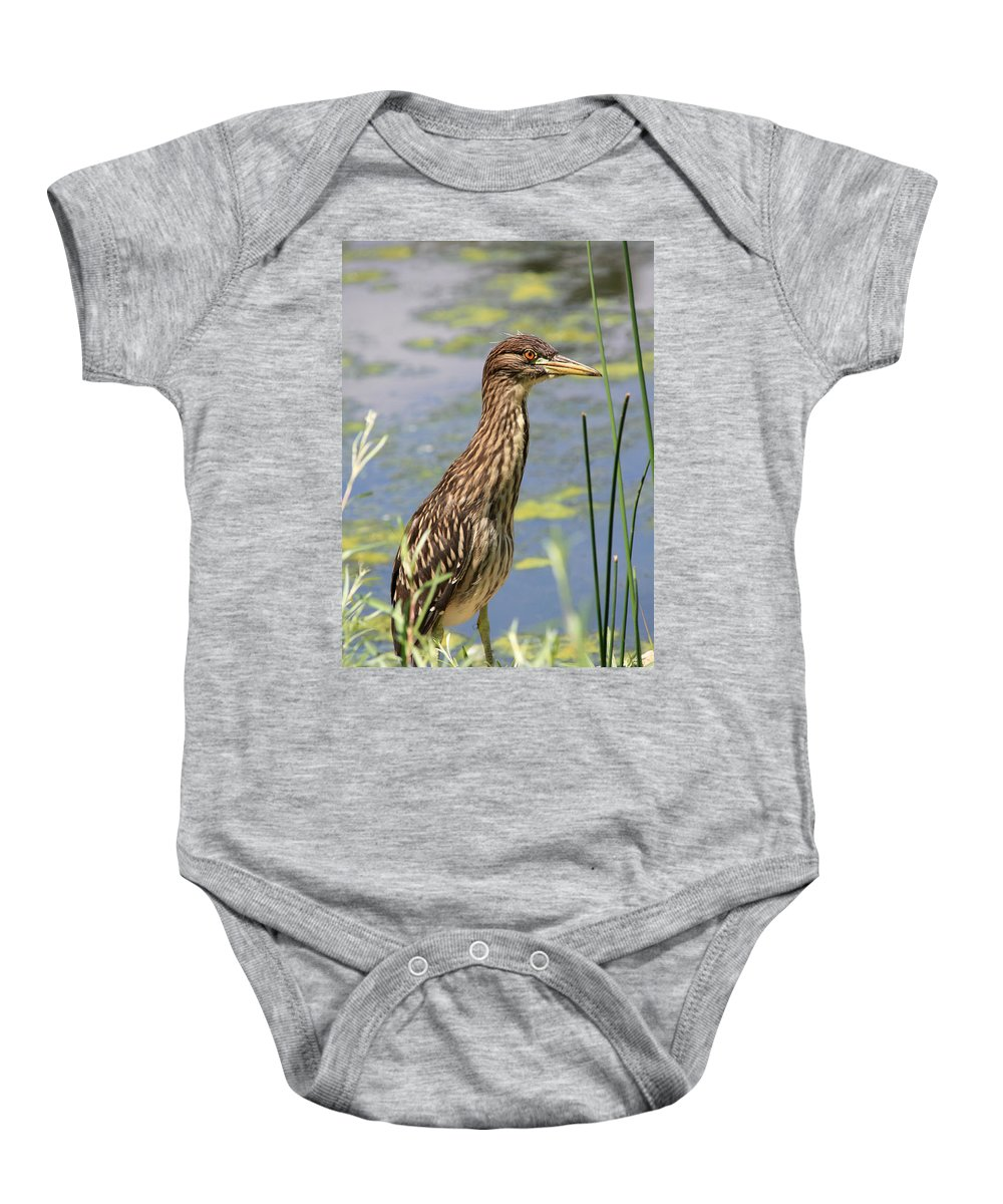 Black Crowned Night Heron Baby Onesie featuring the photograph Young Heron by Shane Bechler
