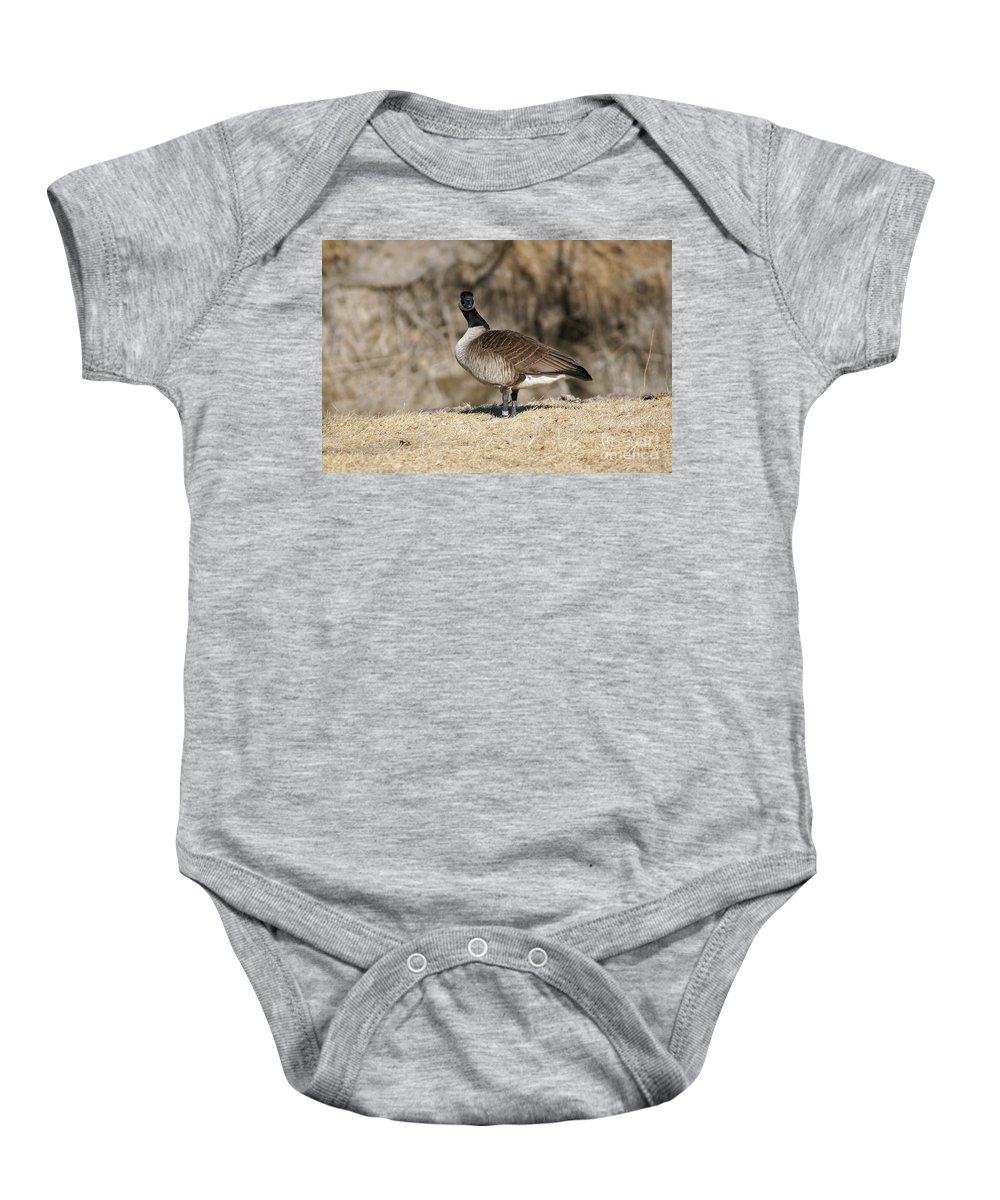 Goose Baby Onesie featuring the photograph Are You Looking At Me by Lori Tordsen