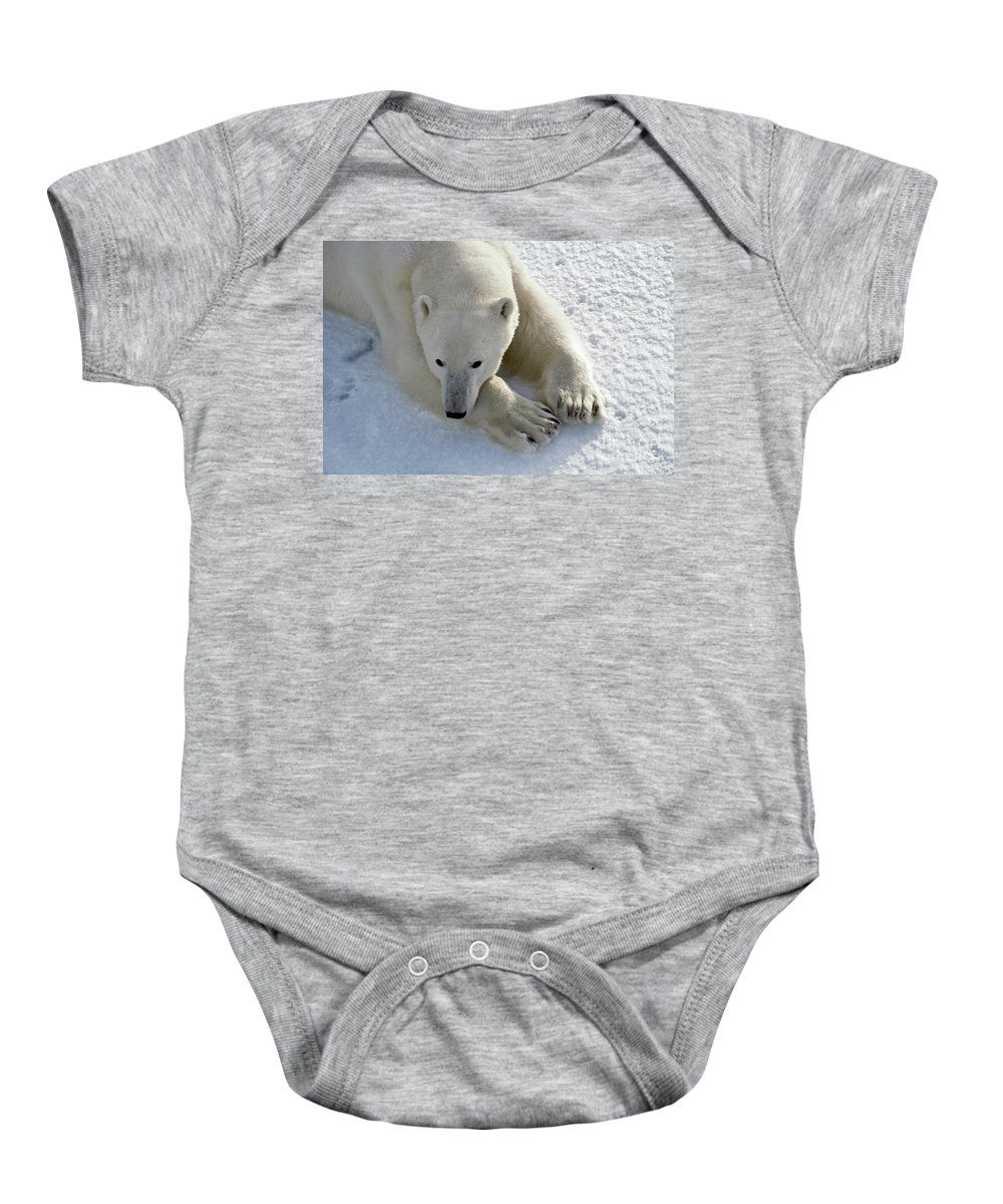 Animal Baby Onesie featuring the photograph Polar Bear by Francois Gohier and Photo Researchers