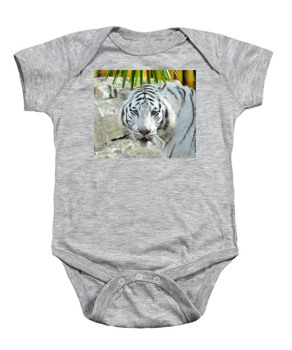 Fine Art Photography Baby Onesie featuring the photograph White Tiger by David Lee Thompson