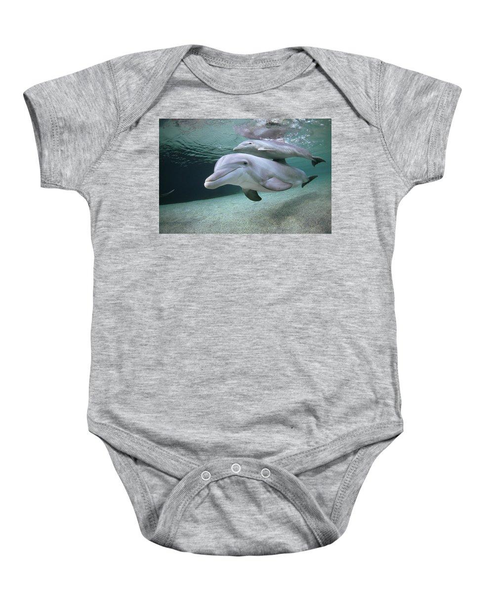 00087616 Baby Onesie featuring the photograph Bottlenose Dolphin Underwater Pair by Flip Nicklin