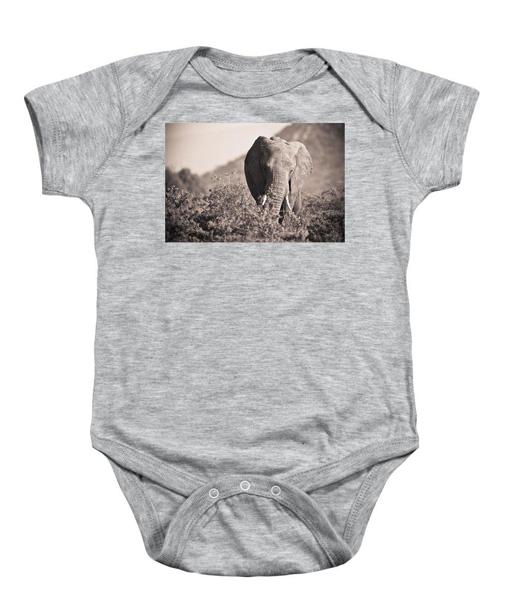 African Baby Onesie featuring the photograph An Elephant Walking In The Bush Samburu by David DuChemin