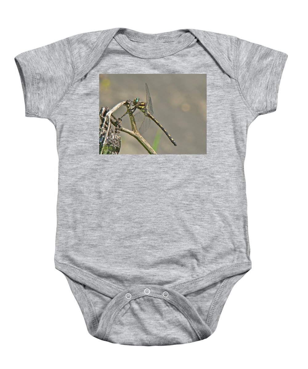 Arrowhead Spiketail Baby Onesie featuring the photograph Arrowhead Spiketail Dragonfly - Cordulegaster Obliqua by Mother Nature