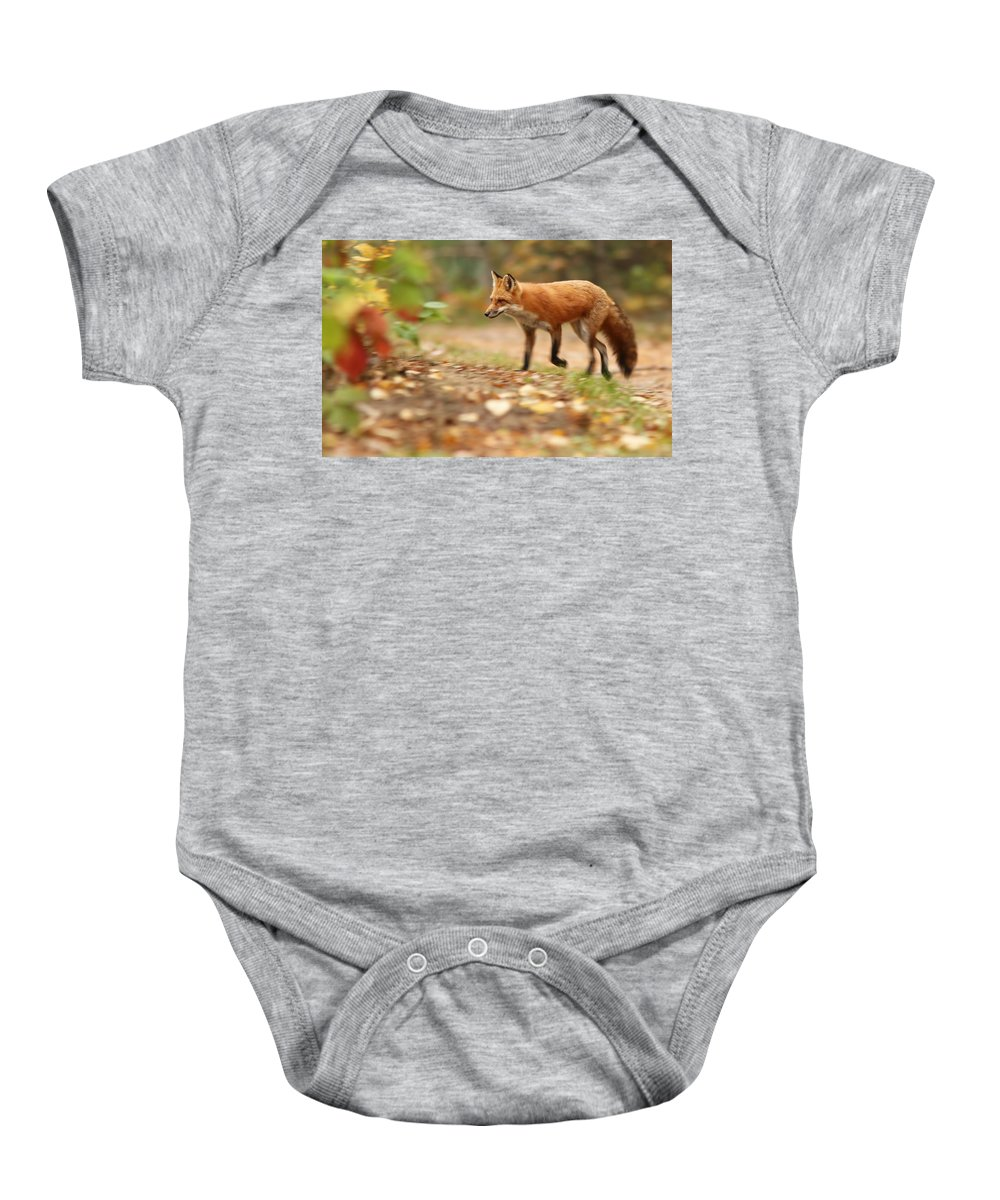 Fox Baby Onesie featuring the photograph Autumn Fox by Mircea Costina Photography