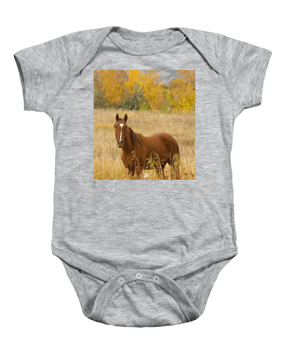 Horse Baby Onesie featuring the photograph Beautiful Chestnut Horse by James BO Insogna